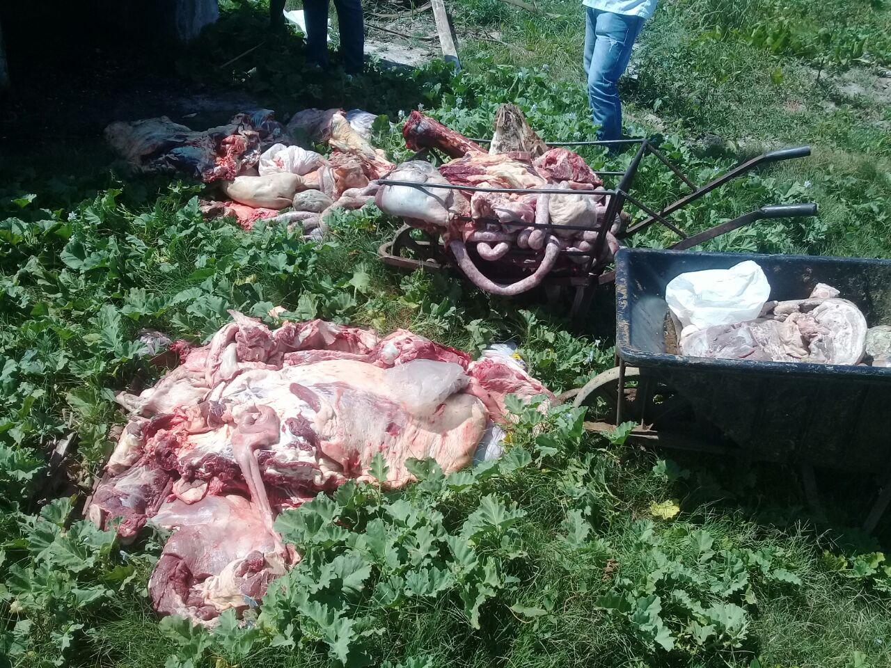 La Policías incauto más de 330 kg de carne vacuna, no apto para el consumo humano