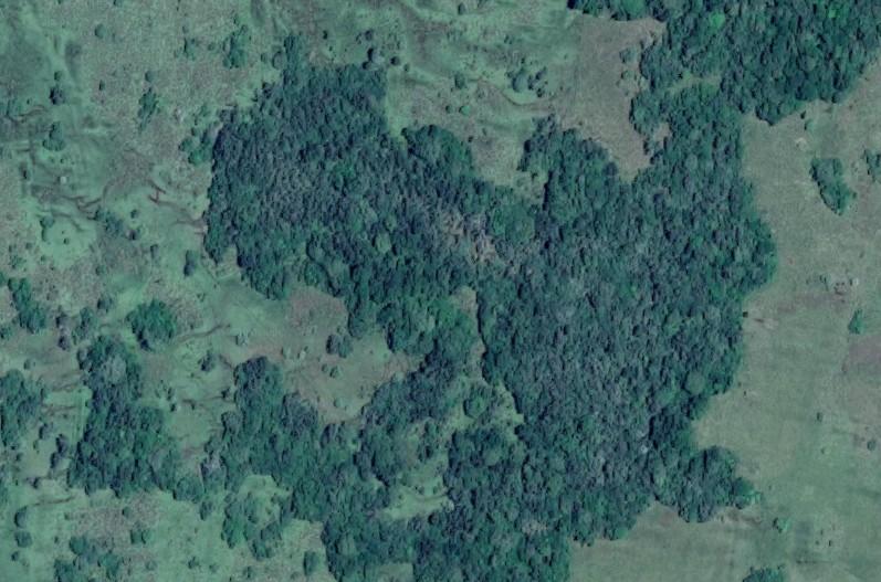 Convocatoria para financiamiento de  Proyectos y Planes de Bosques Nativos