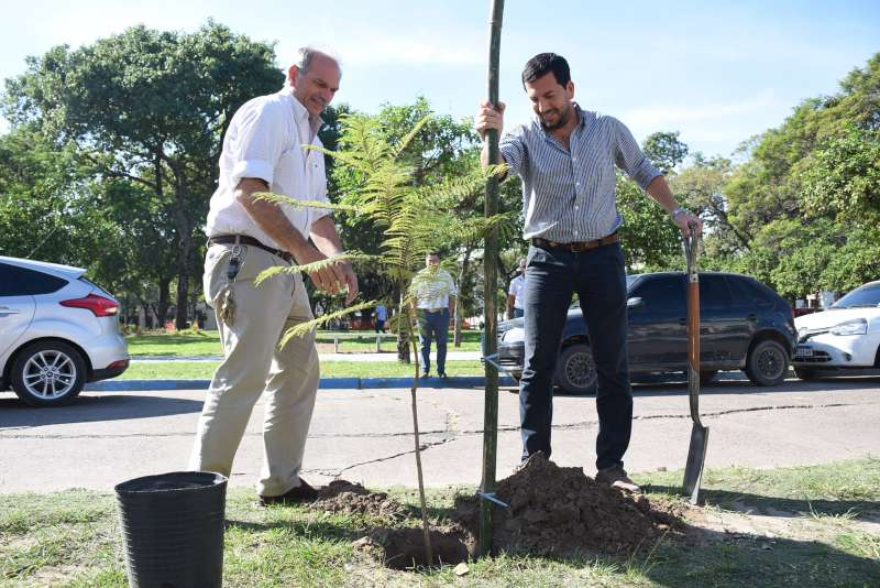 La Municipalidad plantó nuevos árboles en la plaza La Cruz