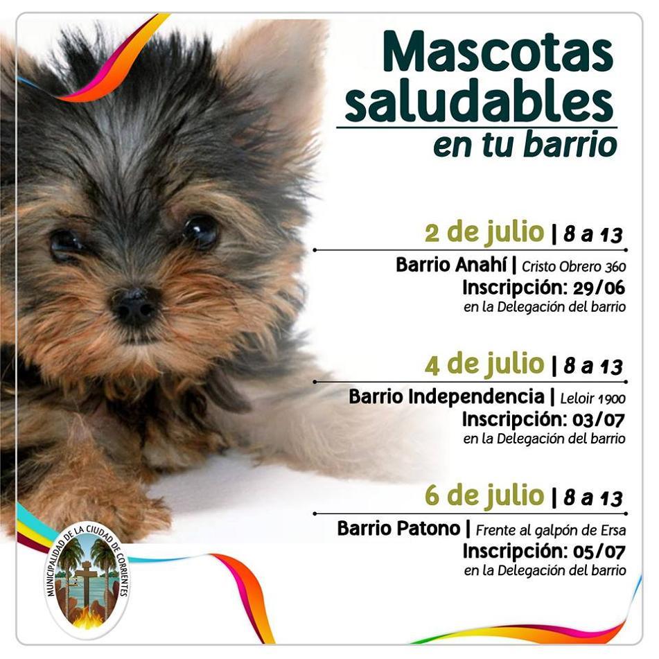 Mascotas Saludables: este lunes, en el barrio Anahí