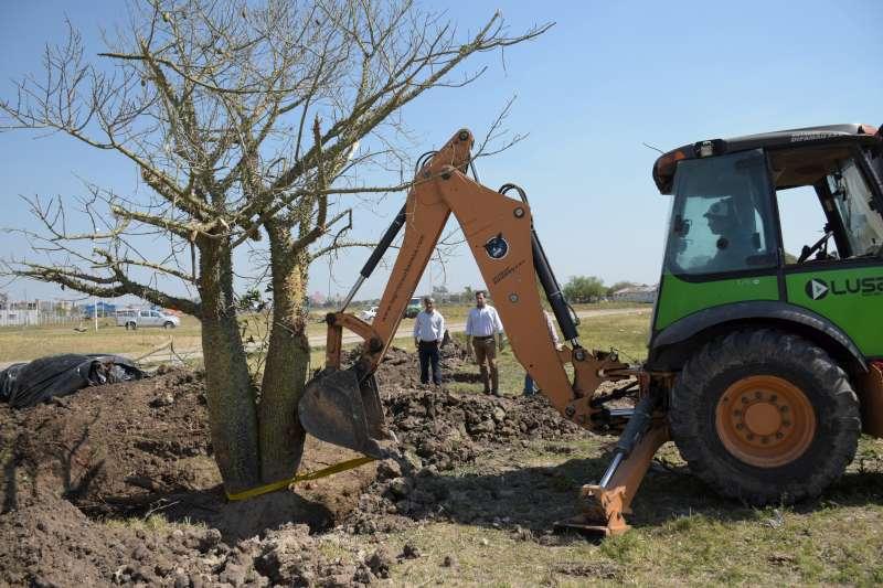 La Municipalidad reubicó tres árboles históricos en el parque Hipódromo