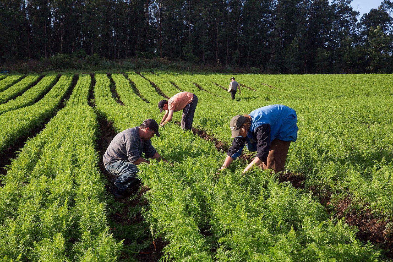 El Defensor recomendó evitar la eliminación del Monotributo  Social Agropecuario para los productores de la provincia