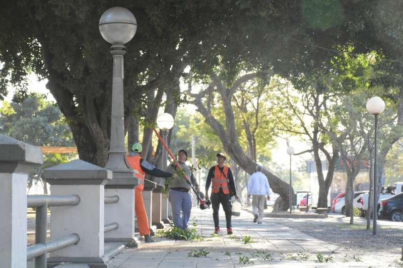 La Municipalidad trabaja en la recuperación del arbolado urbano en la Costanera