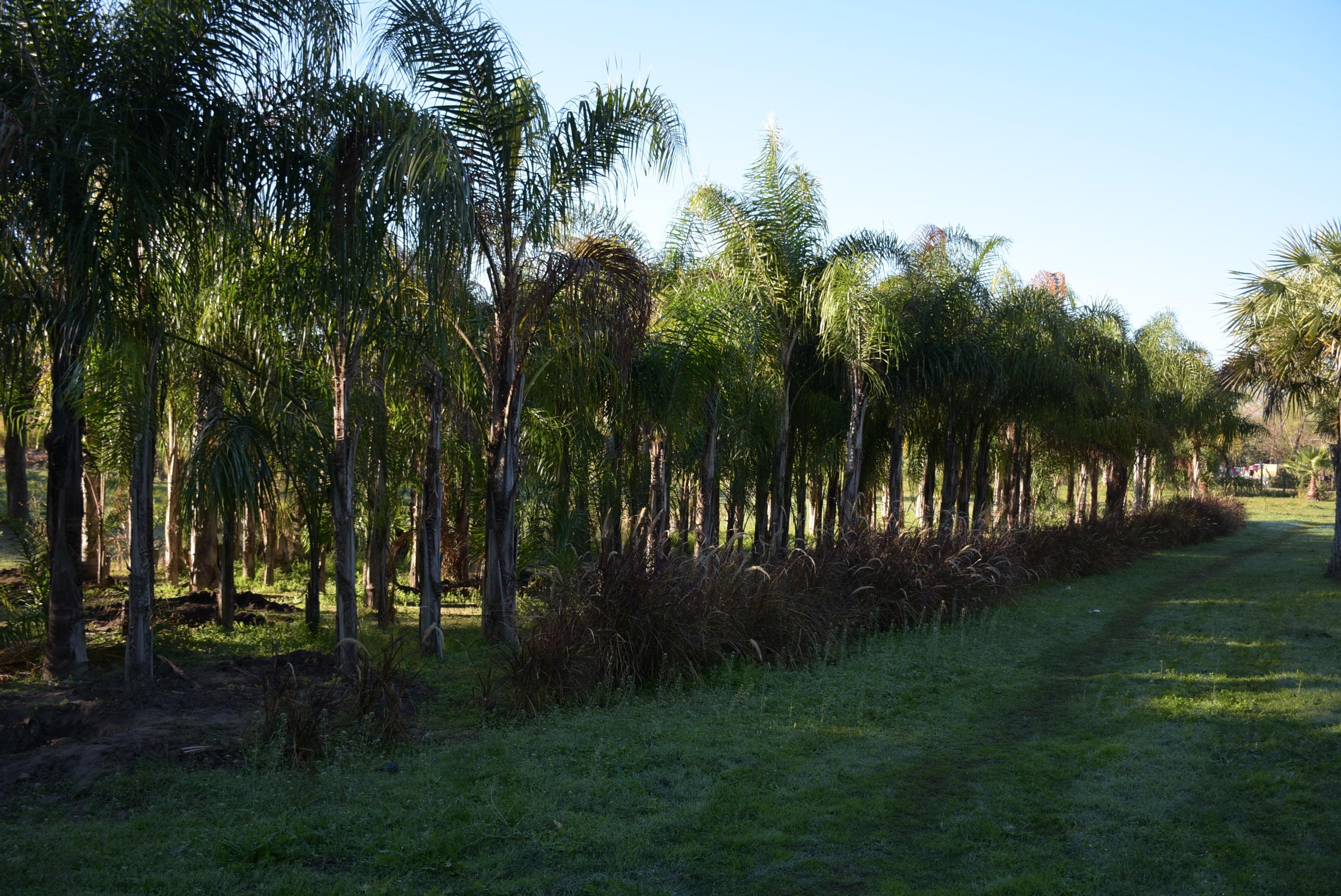 La Municipalidad prepara actividades por la Semana del Árbol