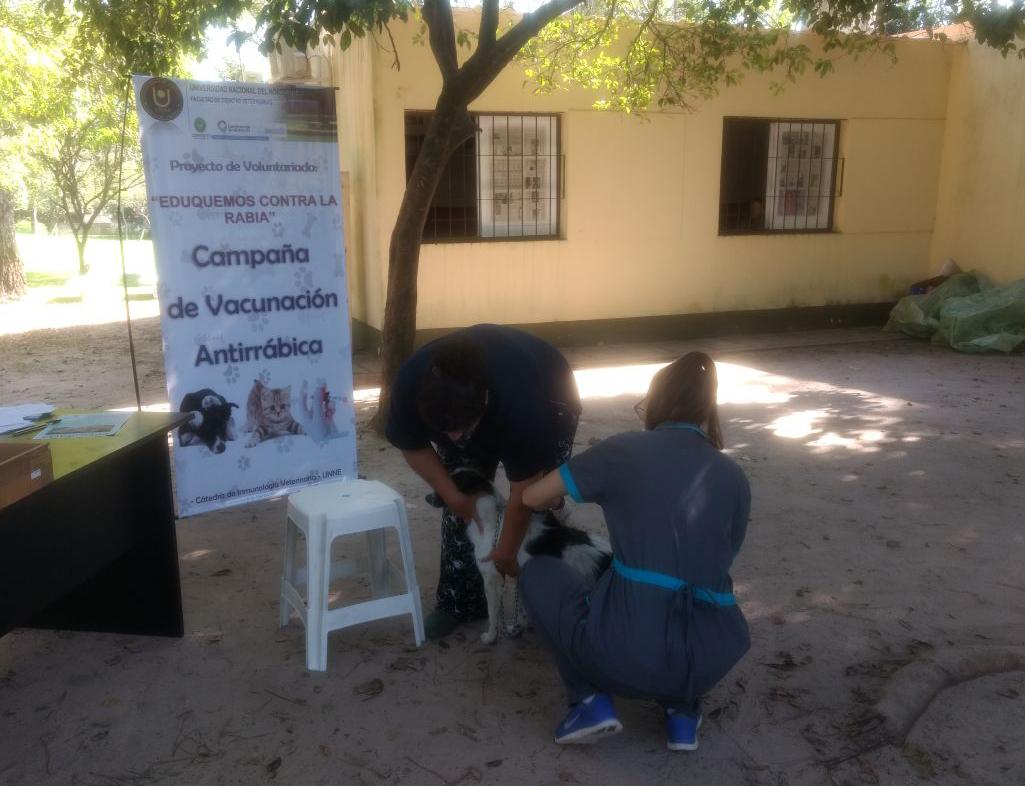 Insisten en la necesidad de vacunar las mascotas contra la rabia
