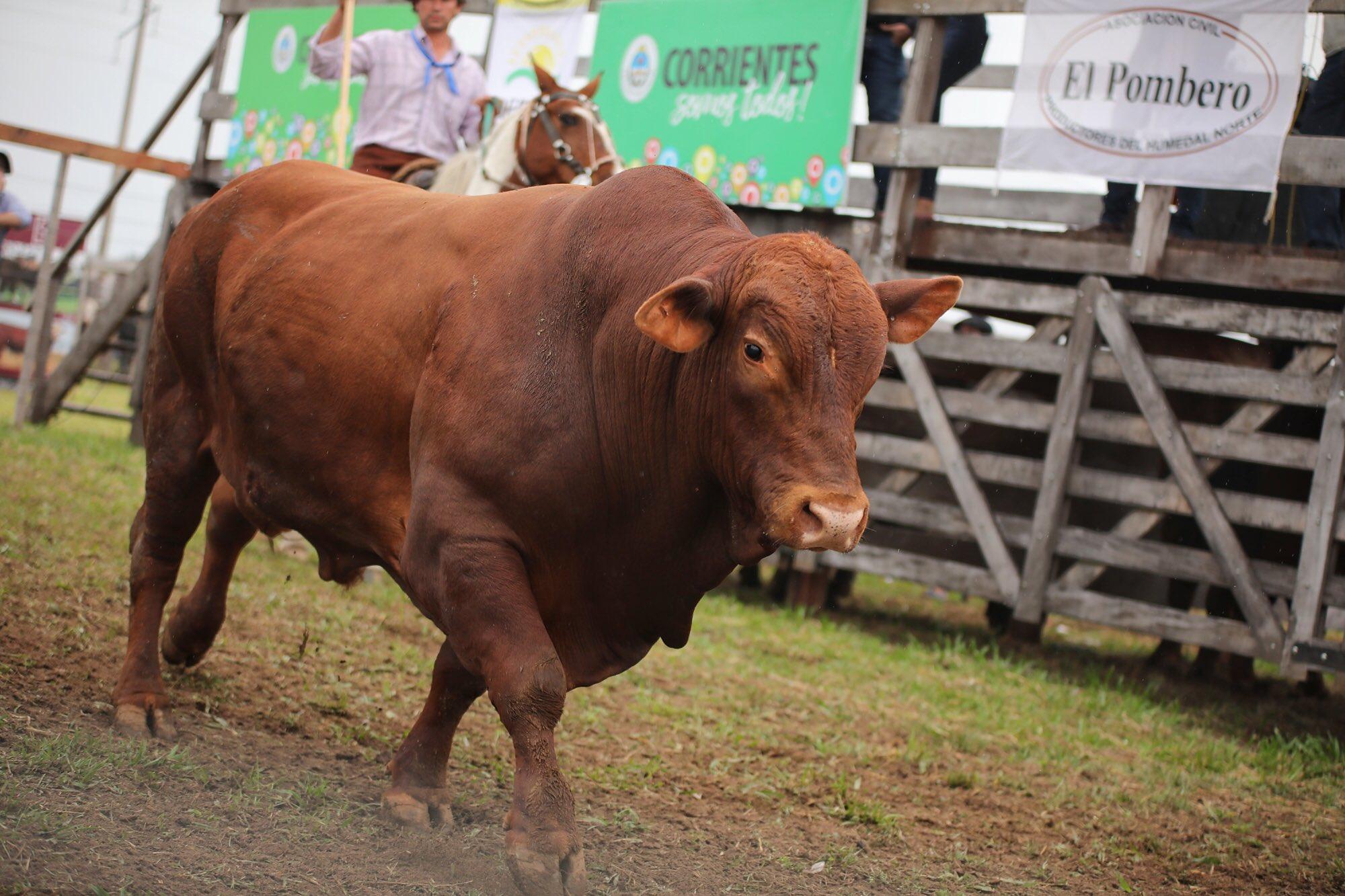 El Gobernador Gustavo Valdés encabezó el 1° Remate Ganadero de Primavera