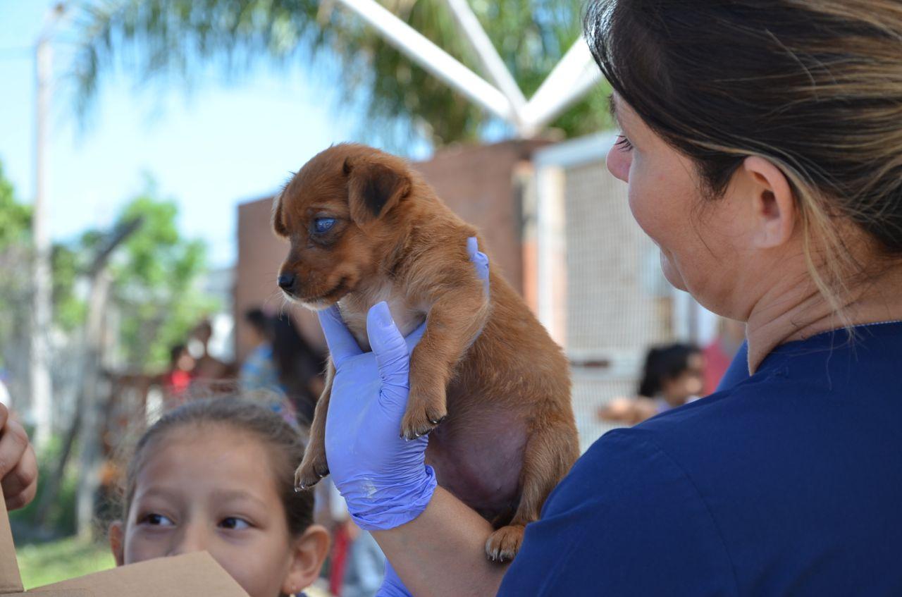 Mascotas Saludables, exitosa jornada en el barrio Irupé