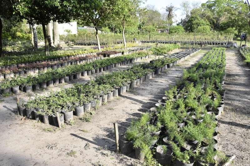 La Municipalidad potencia la producción del vivero del barrio Esperanza