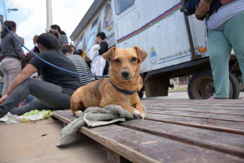 Mascotas Saludables, en Cañada Quiroz