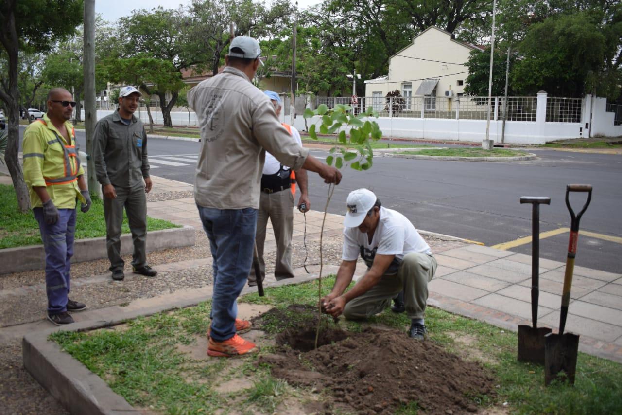 La Municipalidad continúa con la plantación de árboles autóctonos