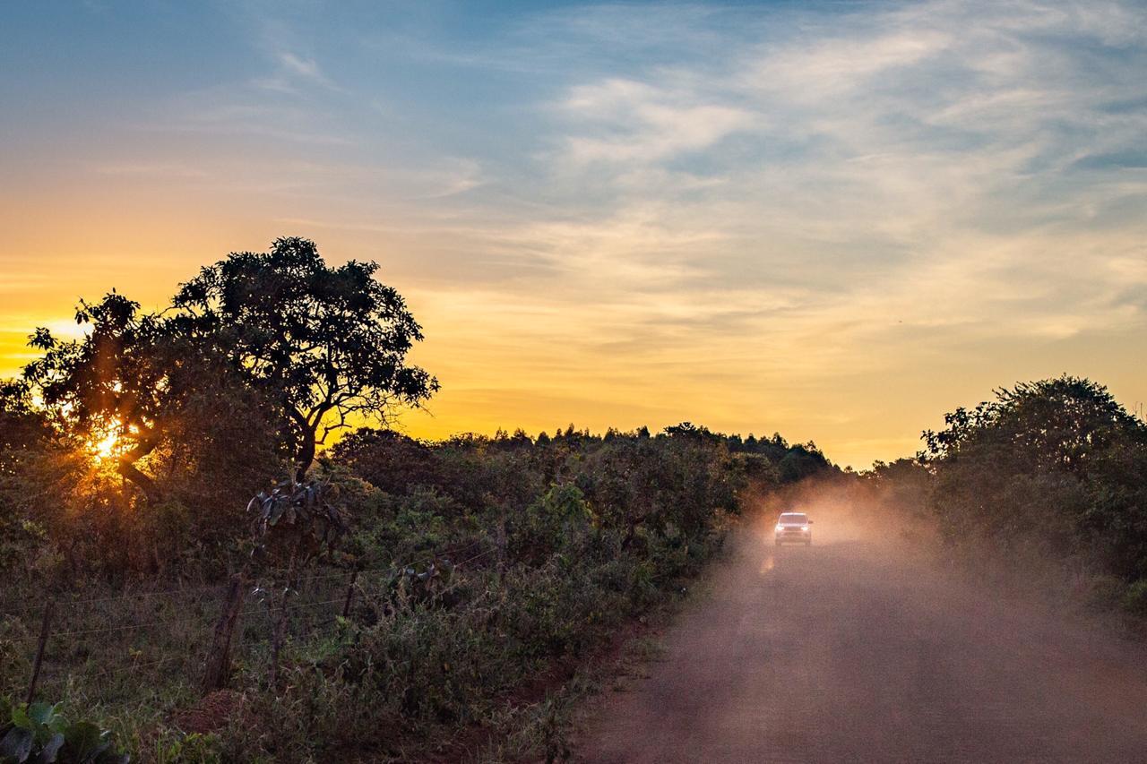 Dos nuevos yaguaretés se incorporan al proyecto de Reintroducción de la Especie en el Parque Iberá