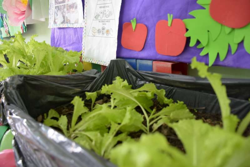 Ñande Huerta, herramienta esencial en el camino hacia una alimentación sustentable