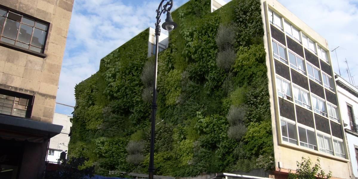 Muros Verdes: estudian su viabilidad como confort térmico-acústico de edificaciones del NEA