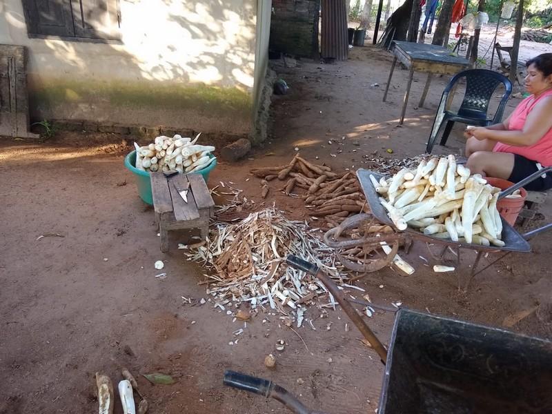 Culminó el relevamiento de cultivos de batata y mandioca en el departamento General Paz