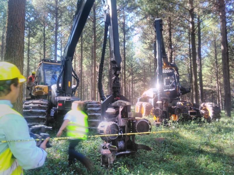 Técnico del Cecap participó de una jornada dinámica de cosecha y carga de troncos