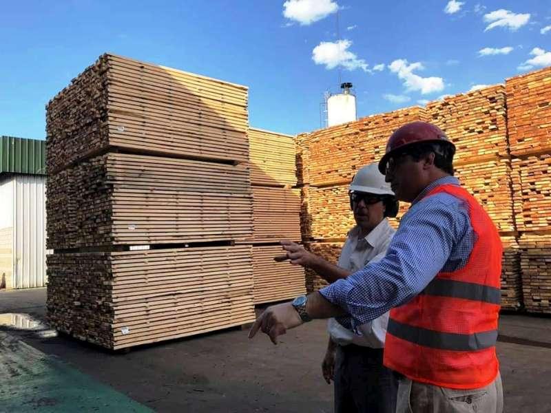 """Schiavi: """"La forestoindustria va a posicionar a Corrientes en los próximos años en el primer nivel económico en el país y la región"""""""