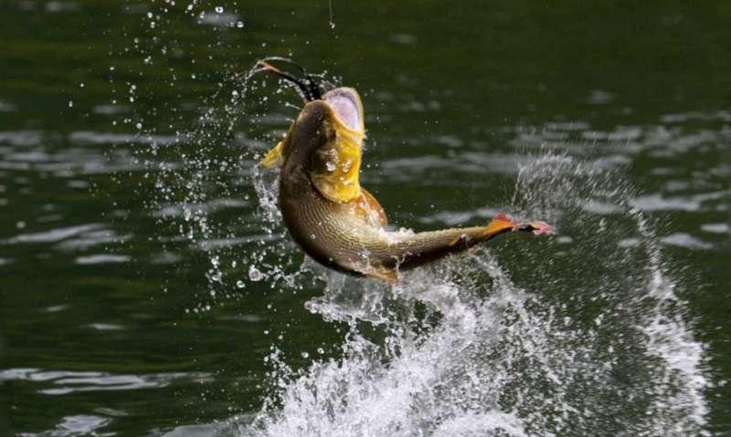 Se aproxima la 56° Fiesta Nacional de la Pesca del Dorado en Paso de la Patria