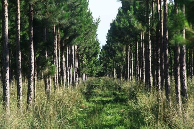 54 millones de pesos para productores forestales de Corrientes
