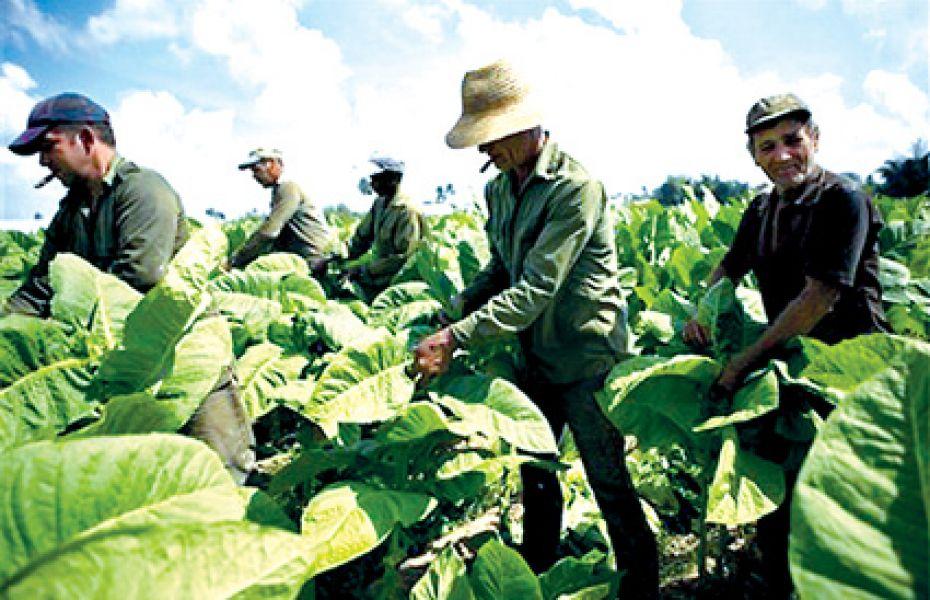 Nueva escala salarial de trabajadores rurales