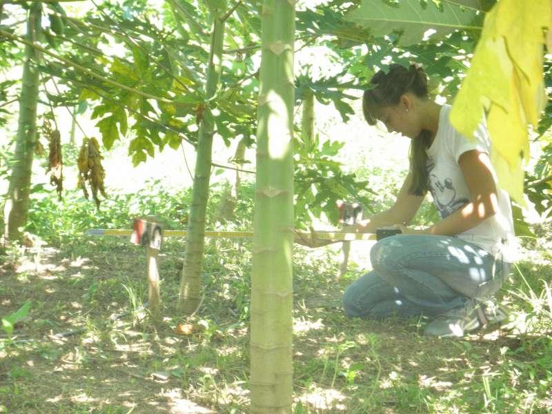 Producción en invernaderos, una alternativa para optimizar el cultivo del mamón