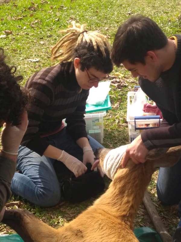 Rescataron un ciervo de los pantanos en San Miguel y lo liberaron en los esteros del Iberá