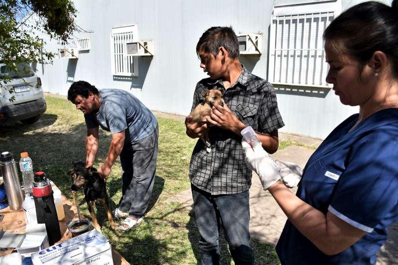 Exitoso operativo de Mascotas Saludables en el barrio Independencia