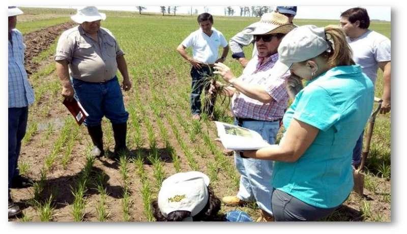 Ante la creciente ineficacia de los herbicidas se sugiere la alternativa agroecológica