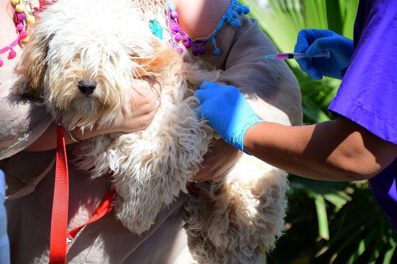 Mascotas Saludables, exitoso operativo municipal con diversas prestaciones gratuitas