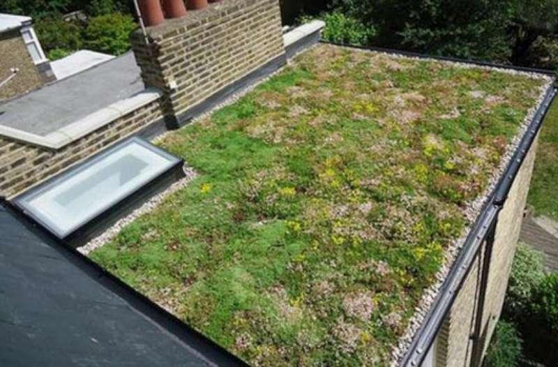 Techos verdes, confirman su eficacia para retardar el escurrimiento de lluvias