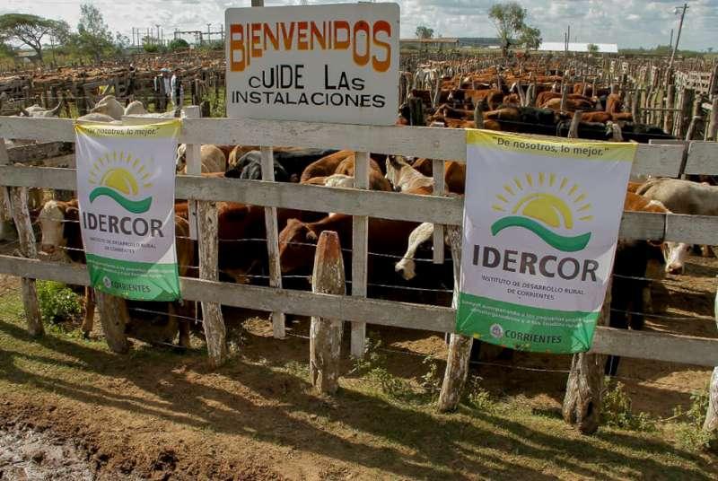 El Gobierno suspende los Remates Ganaderos para proteger a los productores
