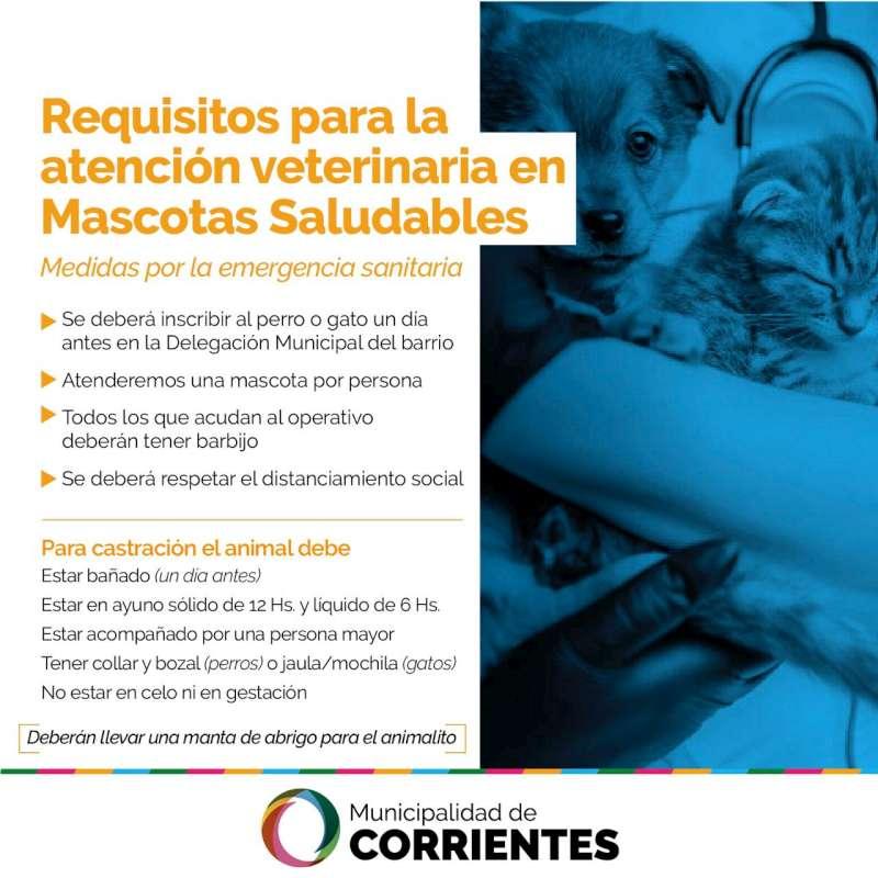 Vuelve el programa Mascotas Saludables con un estricto sistema de turnos para la atención