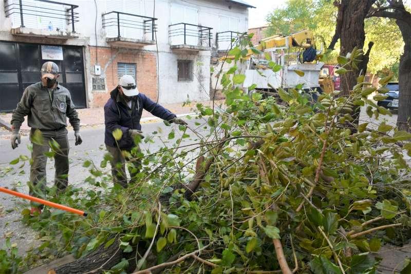 La Municipalidad inició el programa de poda y mantenimiento de árboles en el barrio Bañado Norte