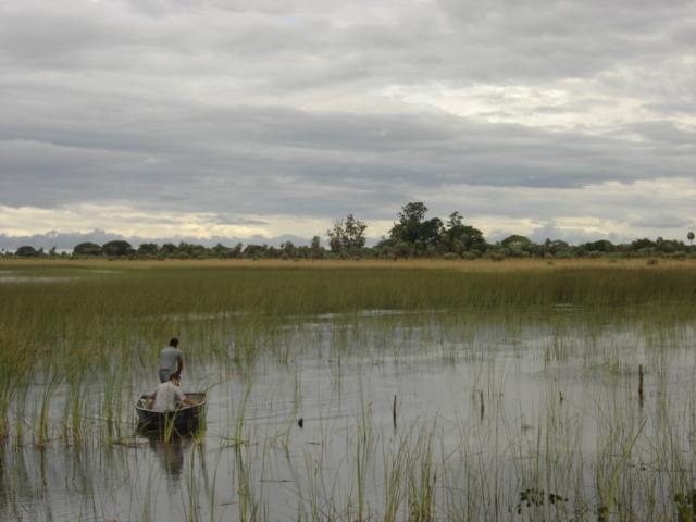 Mediante estudios de polen, buscan reconstruir la evolución de comunidades vegetales de Corrientes