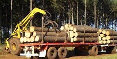 Valdés promulgó ley que adhiere a Legislación Nacional que amplía beneficios al sector forestal