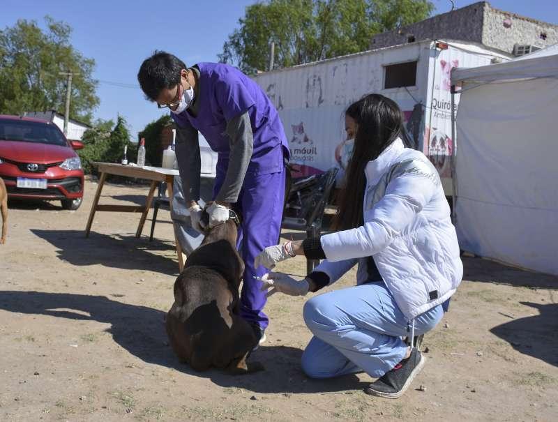 Ferias de la Ciudad y Mascotas Saludables en los barrios