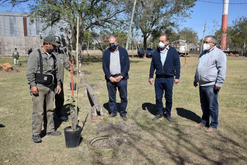 Por una ciudad sustentable la Municipalidad fortalece la plantación de árboles