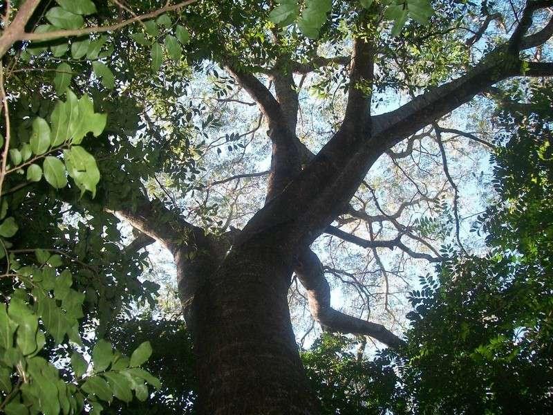 Destinan $ 12.000.000 para la protección de los bosques nativos de la provincia de Corrientes