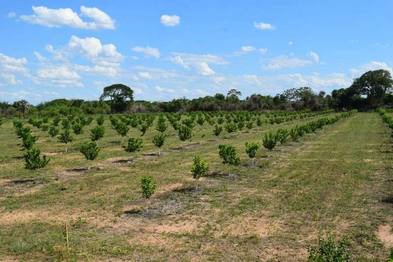 Plan Limón, recorrida y primeras evaluaciones de las plantaciones en chacras de Lomas de Vallejos