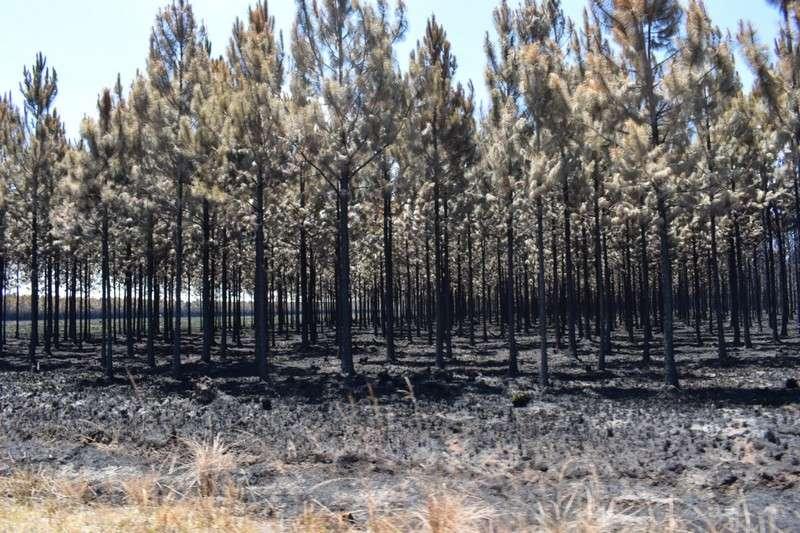 Incendios forestales, se estiman unas 4.000 hectáreas de bosques implantados afectadas en Ituzaingó