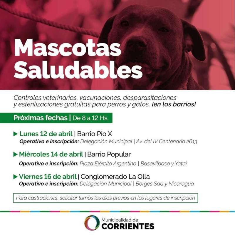 El operativo de Mascotas Saludables visitará los barrios Pio X, Popular y La Olla la próxima semana