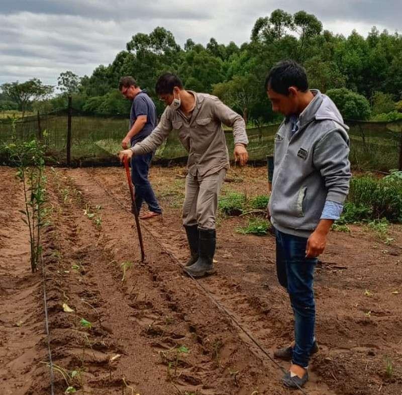 Se instaló el primer núcleo semillero de batata en Pago de los Deseos