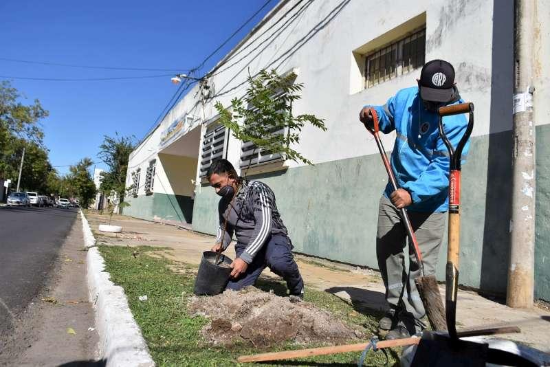 La Municipalidad plantó árboles en el barrio Bañado Norte