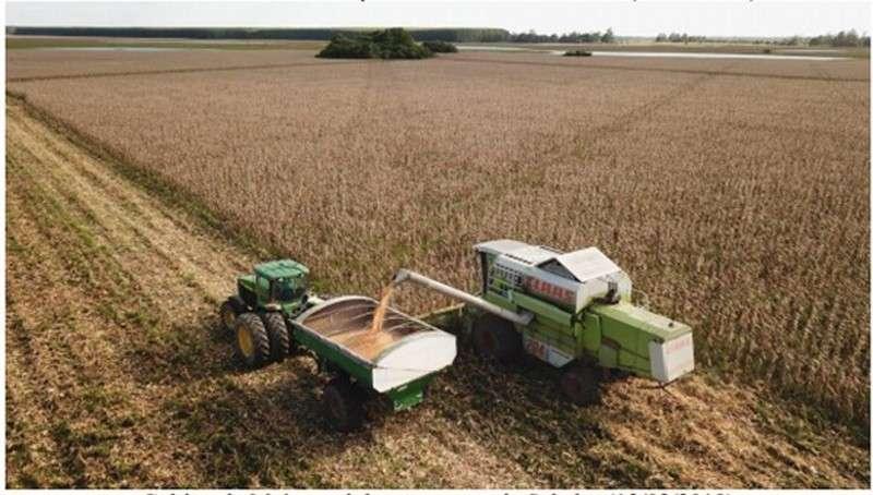 La Provincia lanza un plan financiamiento para productores de maíz
