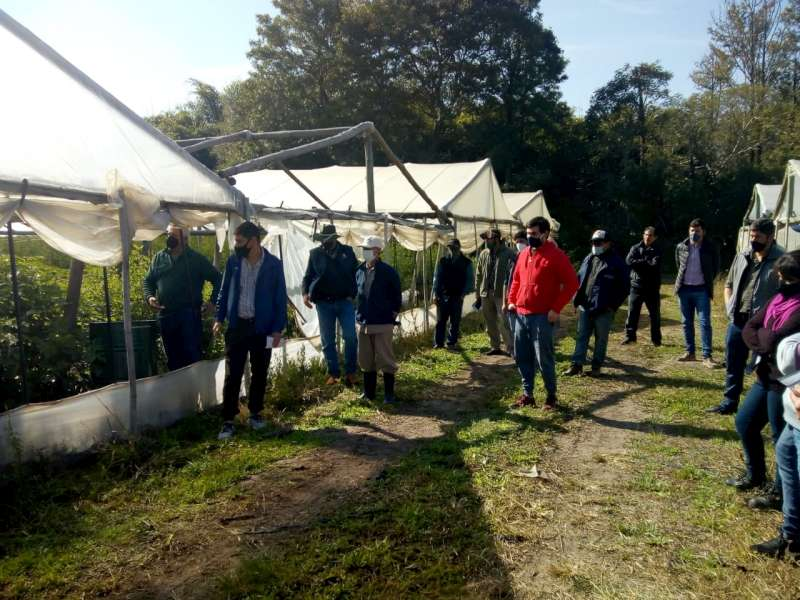 Los grupos Ñande de Bella Vista continúan trabajando en el desarrollo de leguminosas para alimento del rodeo
