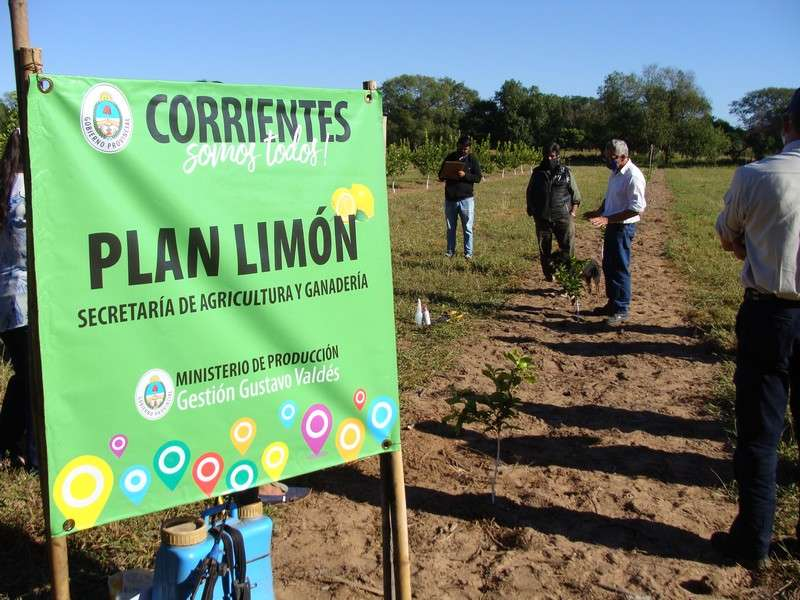 El Gobierno de Corrientes avanza con el Plan Limón superando las 1200 hectáreas