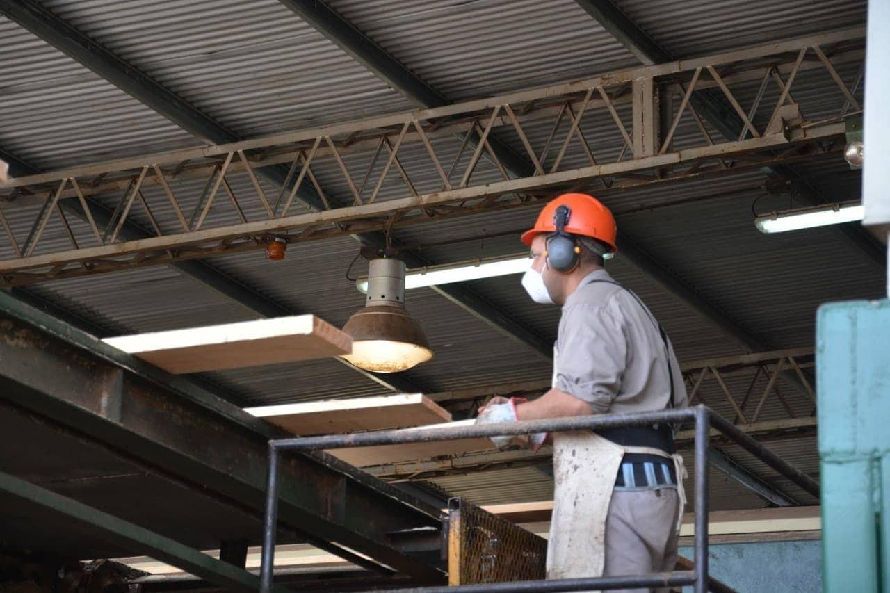 Lanzan líneas de créditos de hasta 10 millones de pesos para proyectos foresto industriales