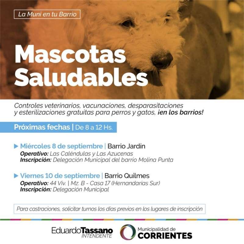 Así será el cronograma del mes de septiembre de Mascotas Saludables