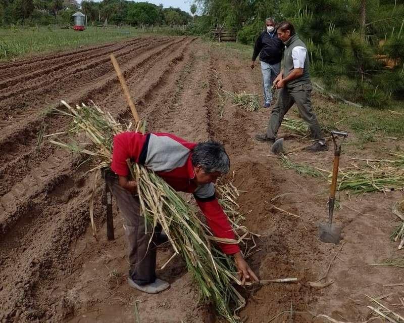 En Ramada Paso, jornada forrajera y demostración práctica para opciones de siembra
